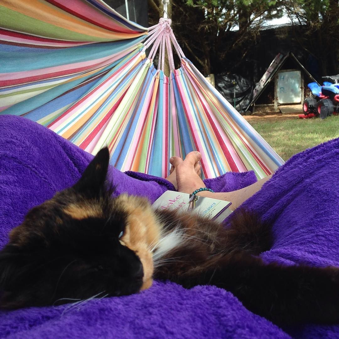 I don't know if I am getting much reading done!! My furry friend is enjoying the hammock with me!! #energyrisingretreats #relaxing #catnapping #catnap #funtimes #sleepy #retreats #retreatliving #flinders #victoria #hammocklife by @energyrisingretreats