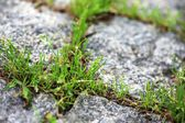 Verde grama crescendo de passagem de pedra — Imagem de Stock #48369085