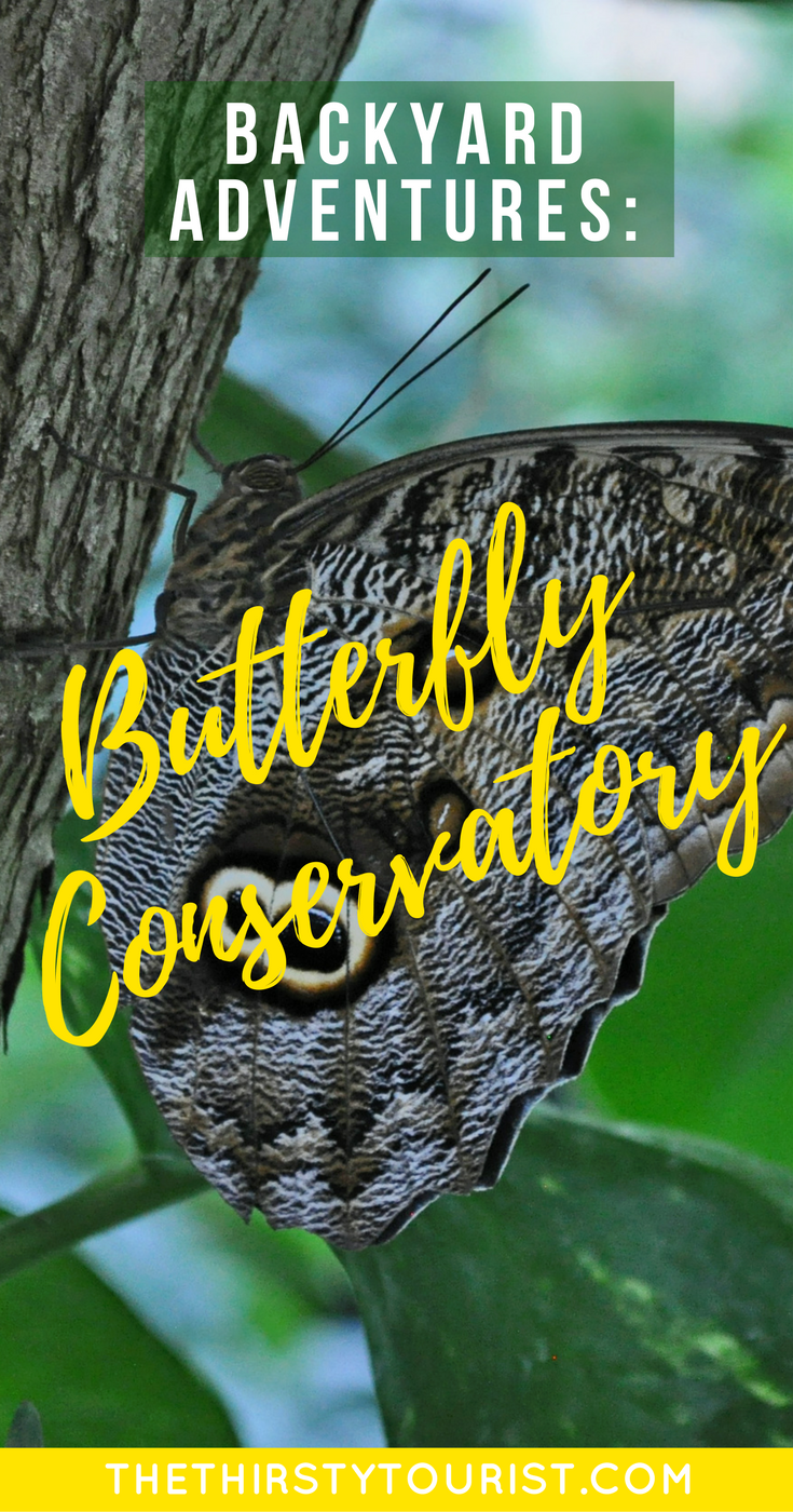 budget backyard adventures visit a butterfly conservatory be