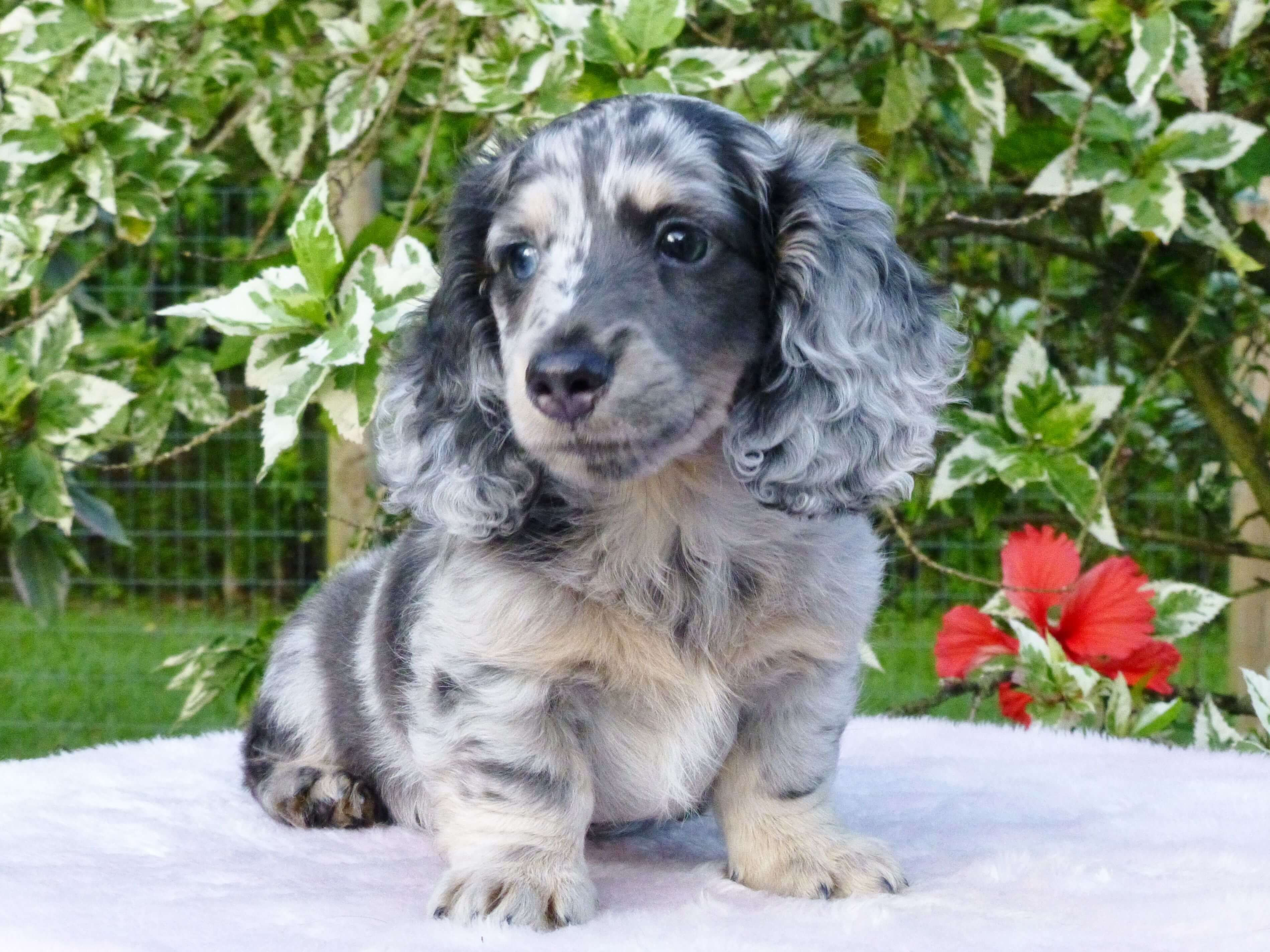 We Are Here To Give You Some Amazing Facts About This Cute Breed