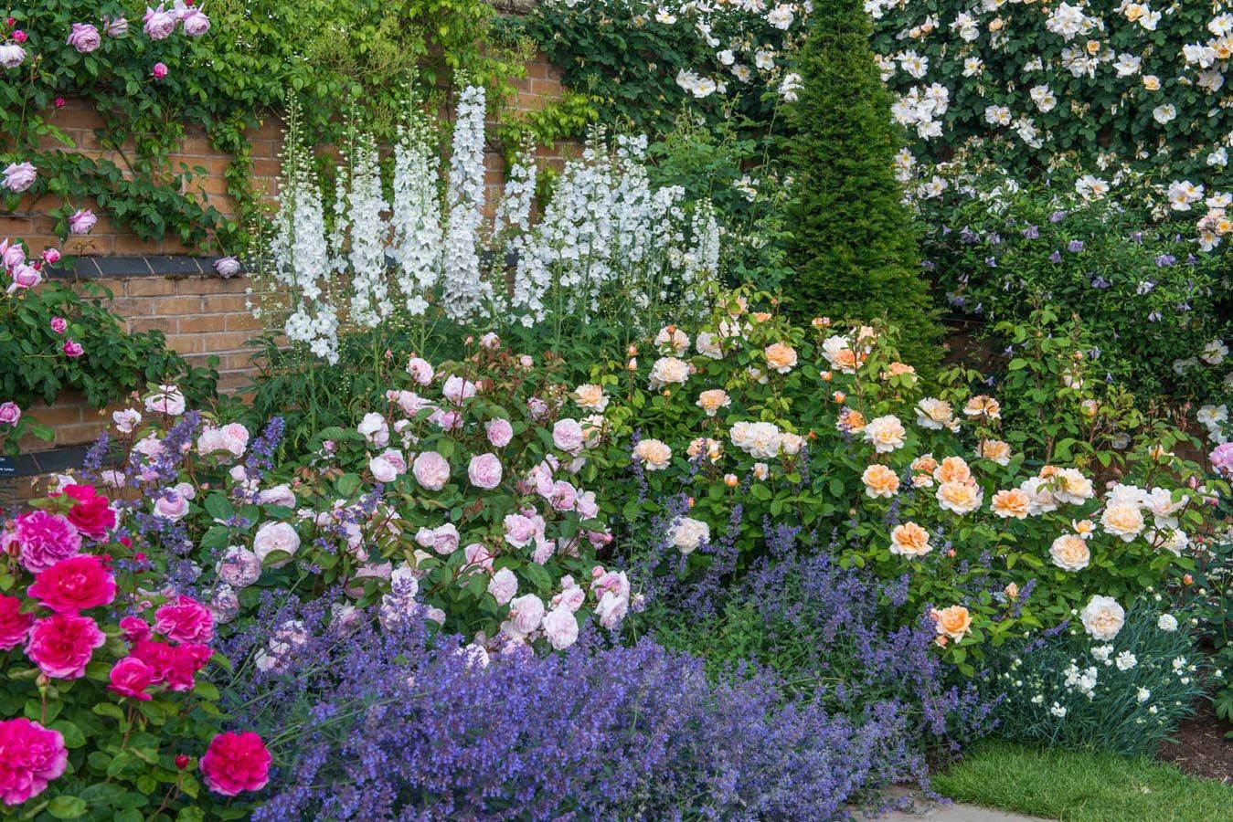 English roses are some of the best loved high performance for Flower garden borders