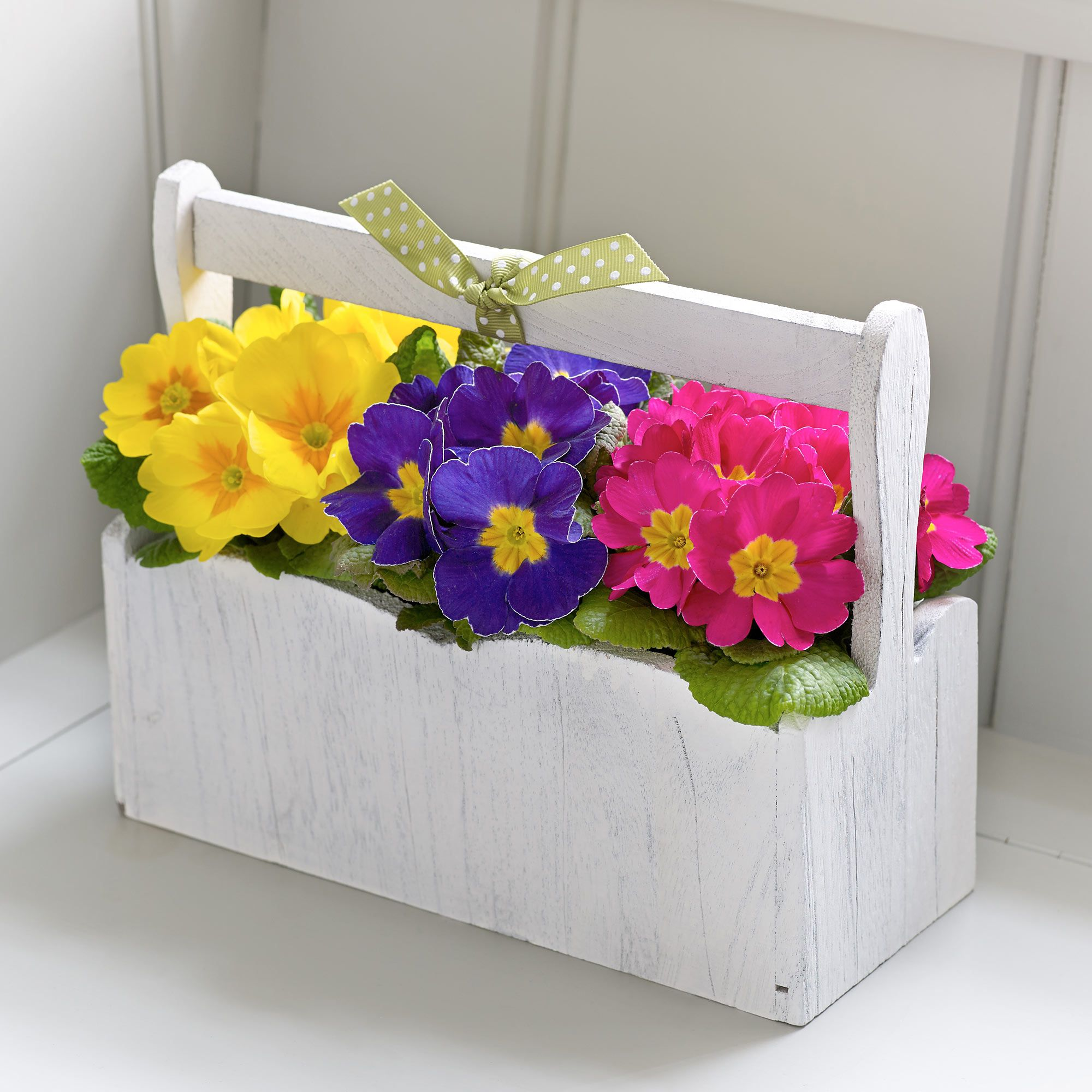 Spring Primrose Planter Interflora 1999 Flowers Pinterest