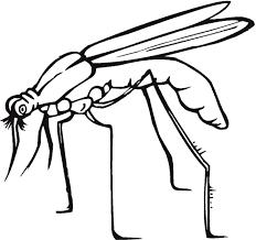 Resultado de imagen para dibujos de insectos para colorear