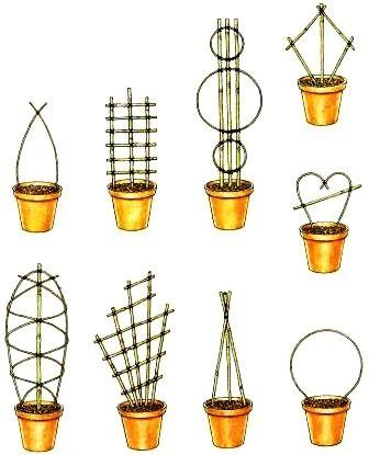 aufbinden pflege von zimmerpflanzen zimmerpflanzen. Black Bedroom Furniture Sets. Home Design Ideas