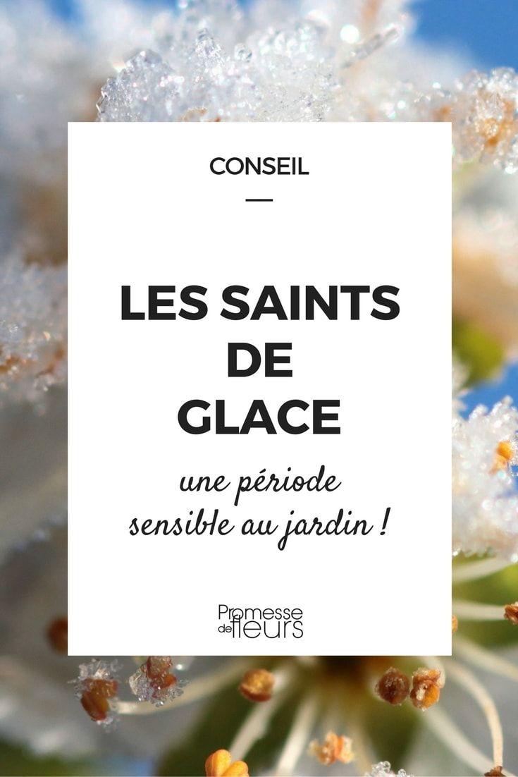Les saints de glace date origine et conseils blog for Conseil de jardinier