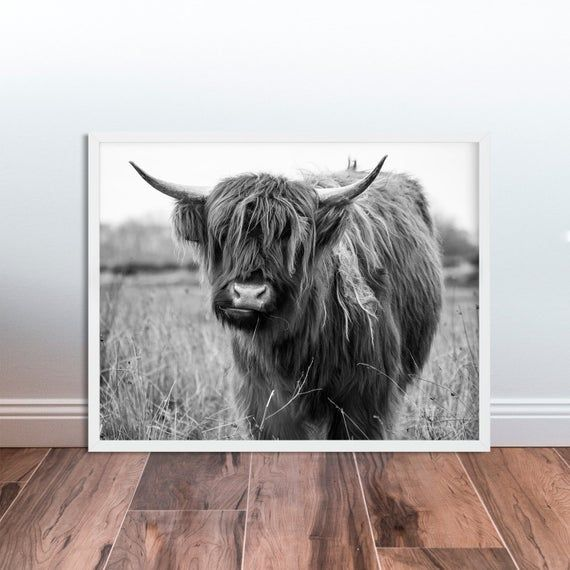 Photo of Highland Cow Photo Black and White Highland Cow Print Shaggy Cow Printable Farm Wall Art Decor Landscape Photography Farm Animal Photography