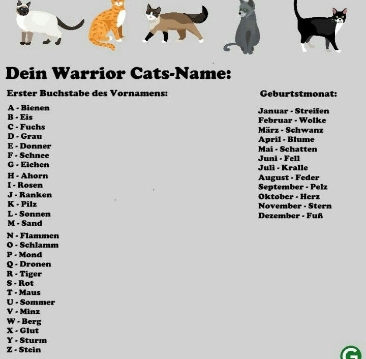 Hier Kann Man Seinen Eigenen Katzennamen Herausfinden Wie Heisst