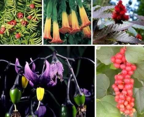 poisonous plants in india pdf