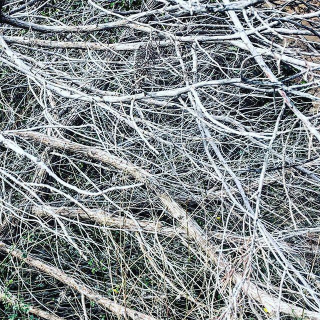 Generative branching