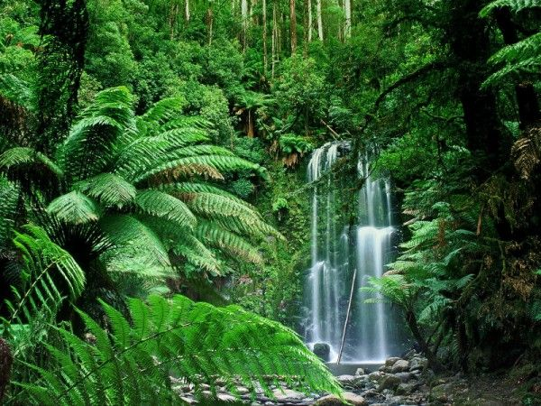One Day Victoria Australia Waterfall Wallpaper Waterfall Photo Forest Waterfall