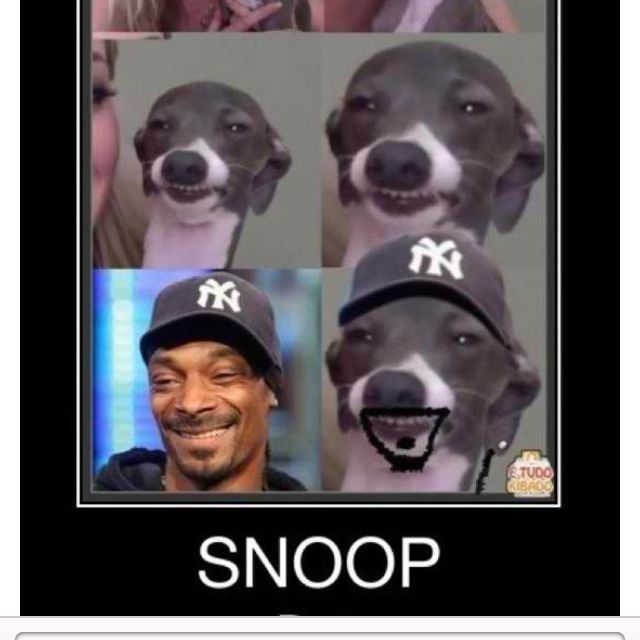 Kermit = Snoop Dog. #jennamarbles HAHHAHAHAHHAH | Laugh ...