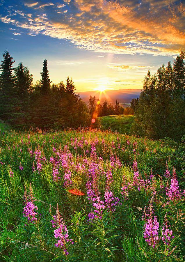 Alaska Field Photograph
