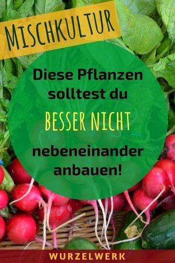 28 Gemüsearten und ihre wirksamsten Mischkultur-Partner + Beispielplan #kräutergartenbalkon