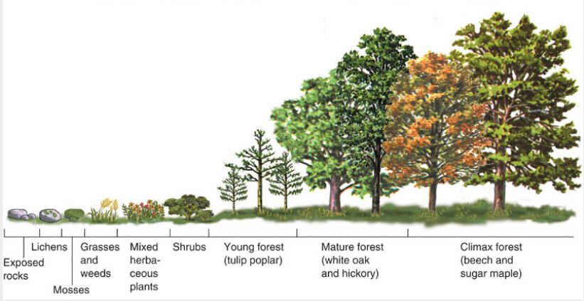 Ecological Succession Explaining Changing  munities In Nature on intelligent life species