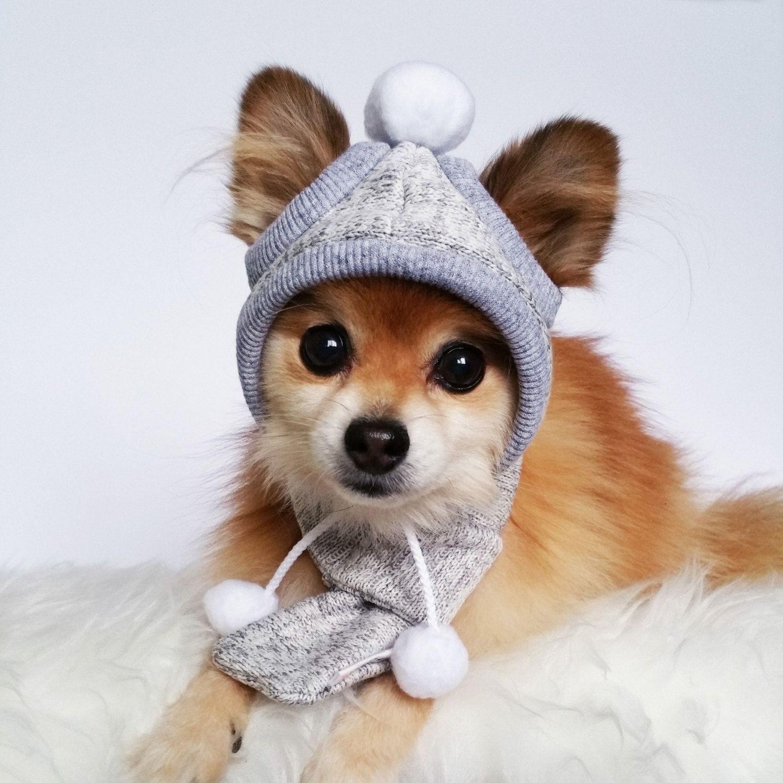 Dogs Winter Hat Scarf Set Handmade Dog Hats Dog Caps Baseball Hat Sweater Cap Girl Beanie Pet Accessories Dog Hoodi Winter Hats Winter Dog Handmade Dog