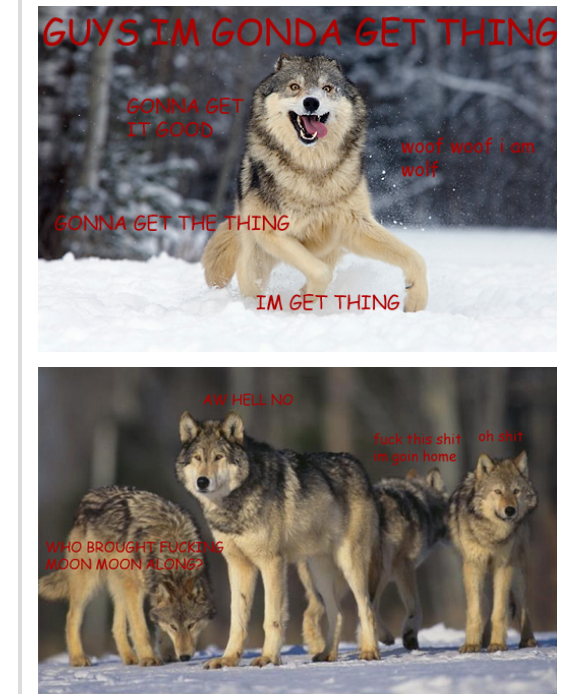Oh How I Laughed Moon Moon Memes Werewolf Name Wolf Meme