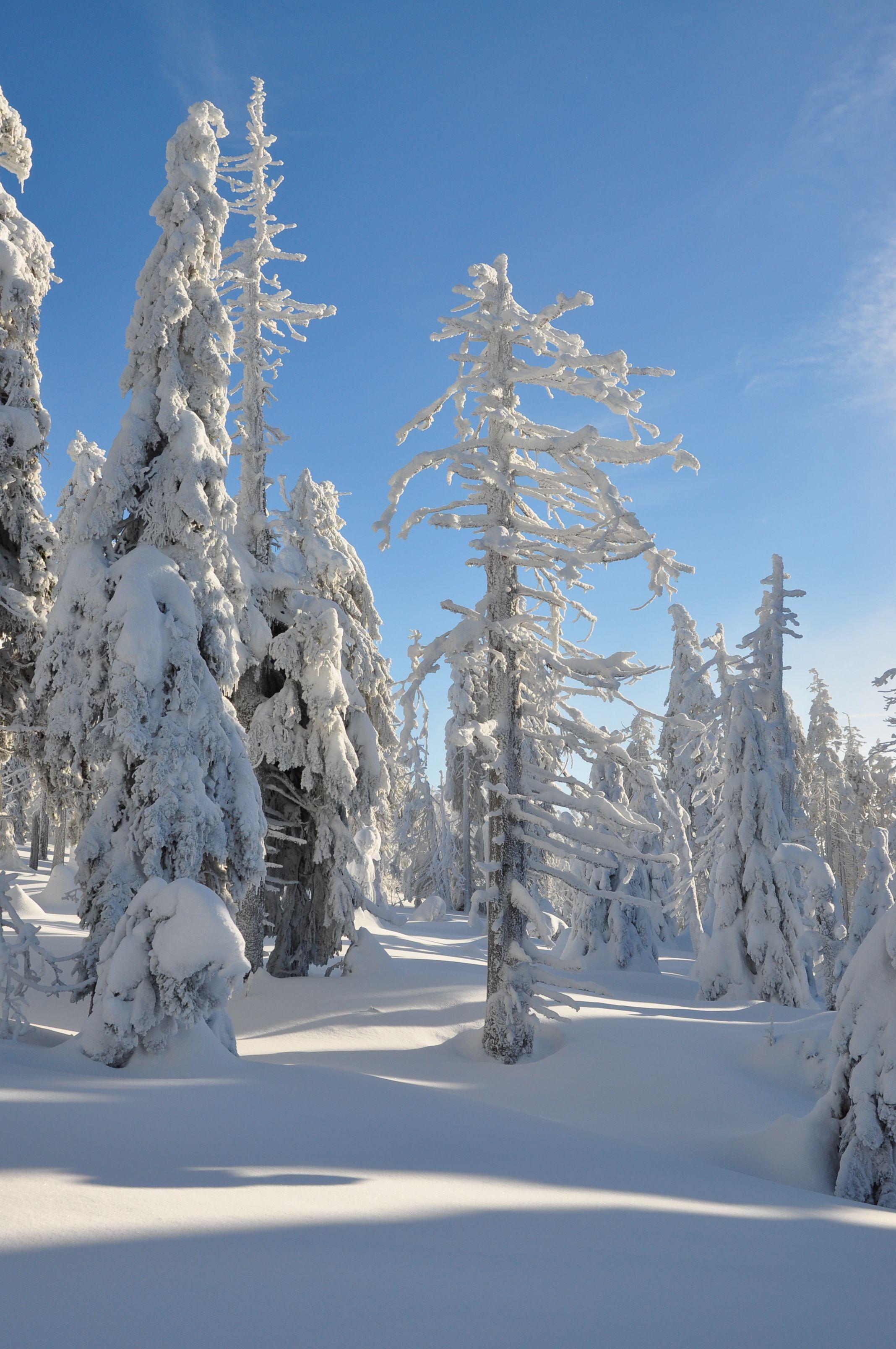 Schneebedeckte Baumlandschaft am Brocken im Harz