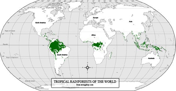 Rain Forest Information For School Kids With Quiz Rainforest Map