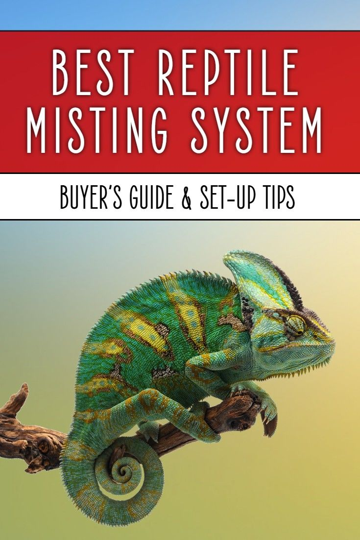 Best reptile misting system