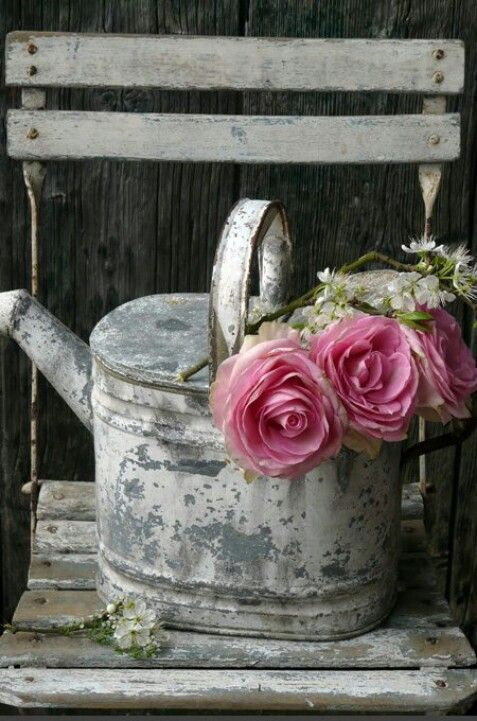 Roses in old water can