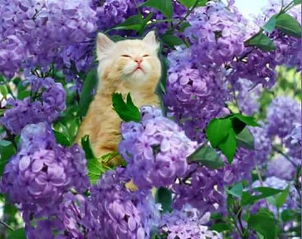 ไม้ดอกที่น่าจะนำมาใช้แต่งสวน