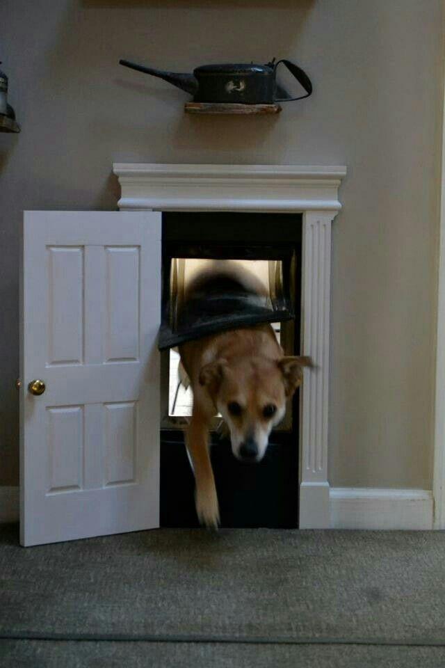 decorative dog doors. Creative And Decorative Pet Door Dog Doors E