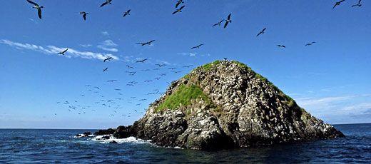 Isla Gorgona es una pequeña isla de Colombia en el Océano Pacífico. La isla funcionó como prisión hasta 1985, cuando se convirtió en un Parque Natural. - www.donquijote.org/cultura/colombia/wildlife/gorgona-island.asp