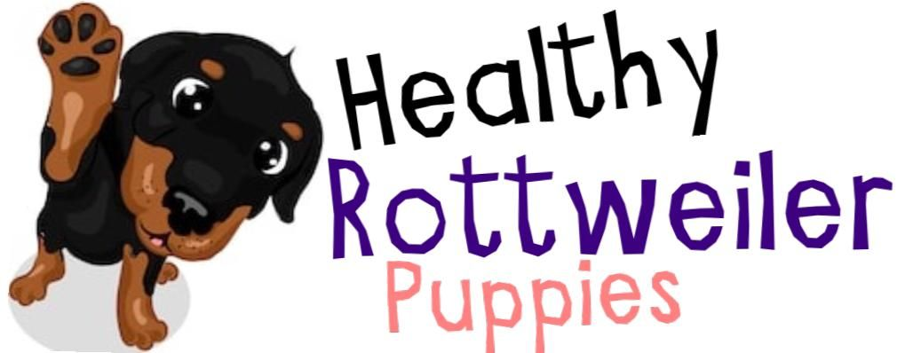 rottweiler puppy cost uk
