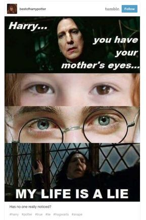 Photo of 19 fois où internet nous a fait rire avec Harry Potter