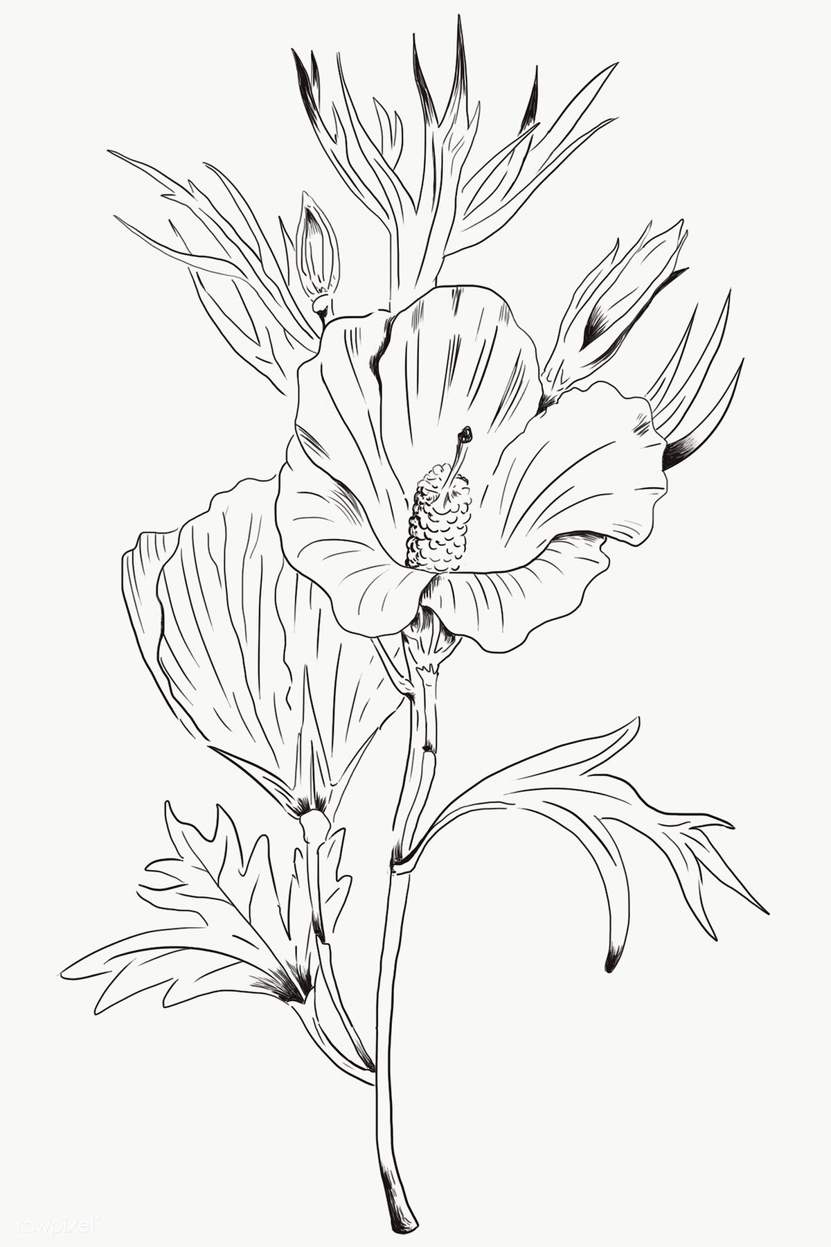 Hand Drawn Lilac Hibiscus Flower Transparent Png Free Image By Rawpixel Com Te In 2020 Hibiscus Drawings Dog Watercolor Painting