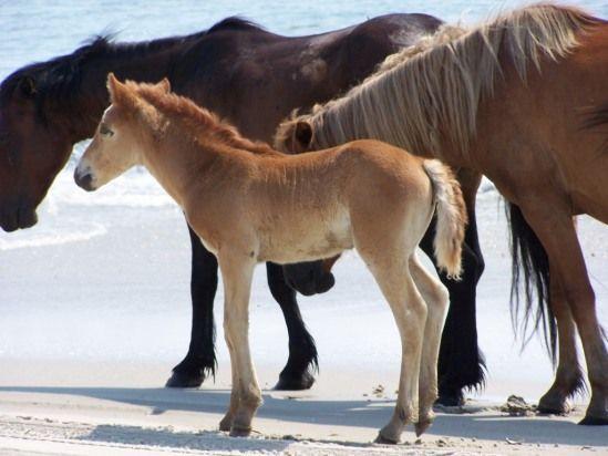 Little Foal - so cute