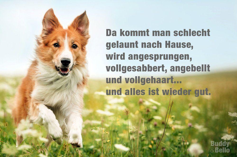 Buddy Bello Alles Uber Hunde Hundespruche Zitate Tiere Lustige Hund Bilder