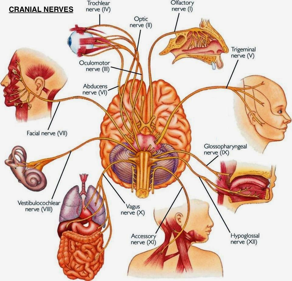 6 Ways To Instantly Stimulate Your Vagus Nerve To Relieve ...