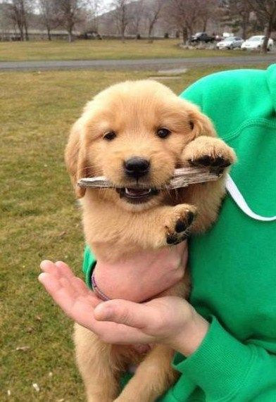 My Teething Puppy Puppiesssss Cute Dogs Dogs Cute Dog Photos