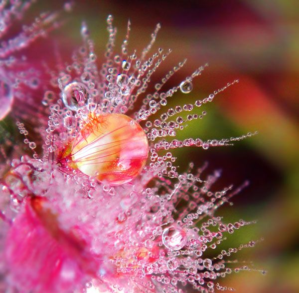 25 Beautiful Examples Of Macro Flower Photography | Mow Design | Graphic Design…