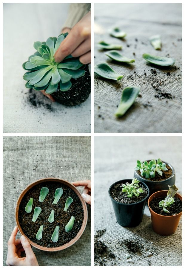 house of plants living with succulents air plants and cacti