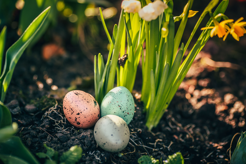 DIY Planter un œuf cru dans un pot de fleurs Blog La