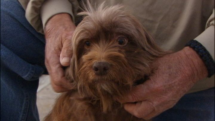Dog Treading Water Two Miles Off Shore Rescued With Images Treading Water Pampered Puppies Losing A Dog