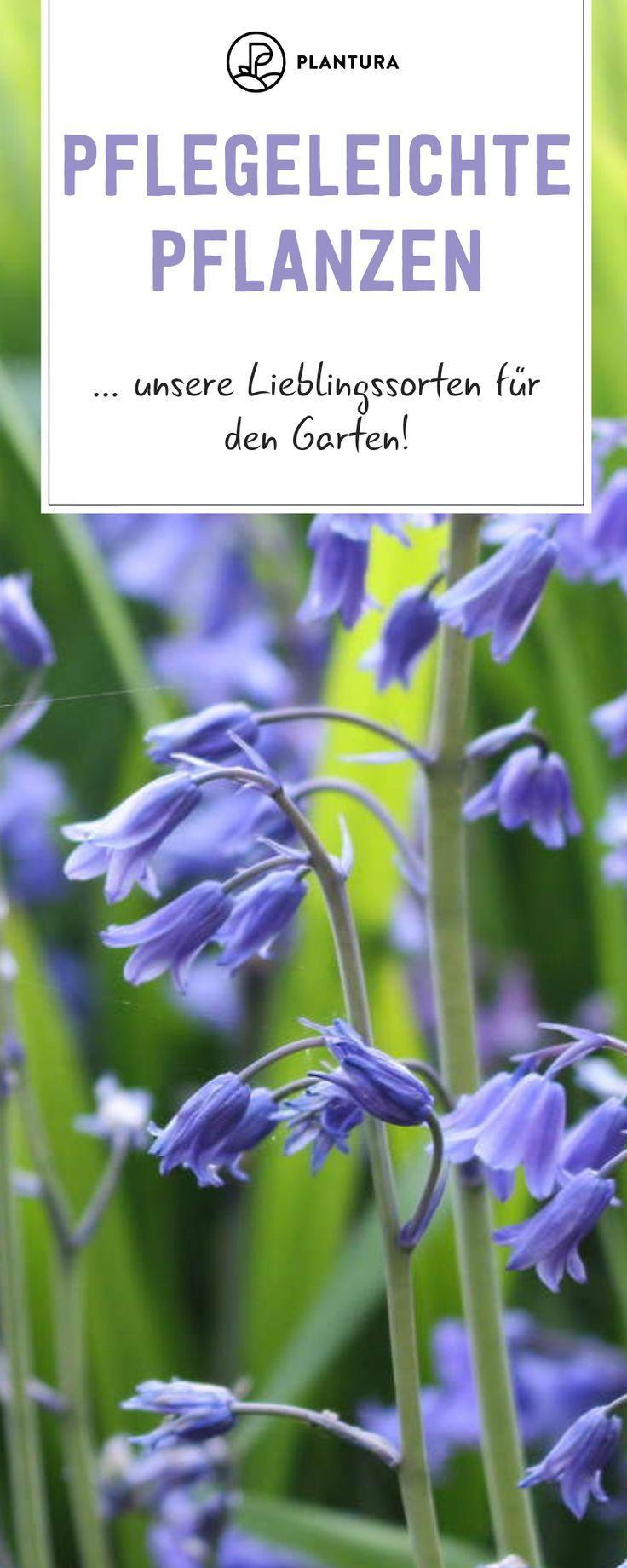 #Die #draußen #für #Gartenpflanzen #pflegeleichte #Top Pflegeleichte Gartenpflanzen: Die Top 10 für draußen        Pflegeleichte Pflanzen - Unsere Lieblingssorten für den Garten: Diese Sorten gedeihen auch auf mageren Böden und ohne Pflege. Wir stellen unsere liebsten pflegeleichten Pflanzen von Lavendel bis Hasenglöckchen vor und zeigen, wie Ihr sie im Garten pflanzen könnt. #pflegeleicht #Lavendel #pflanzen draussen Pflegeleichte Gartenpflanzen: Die Top 10 für draußen #pflegeleichtepflanzen