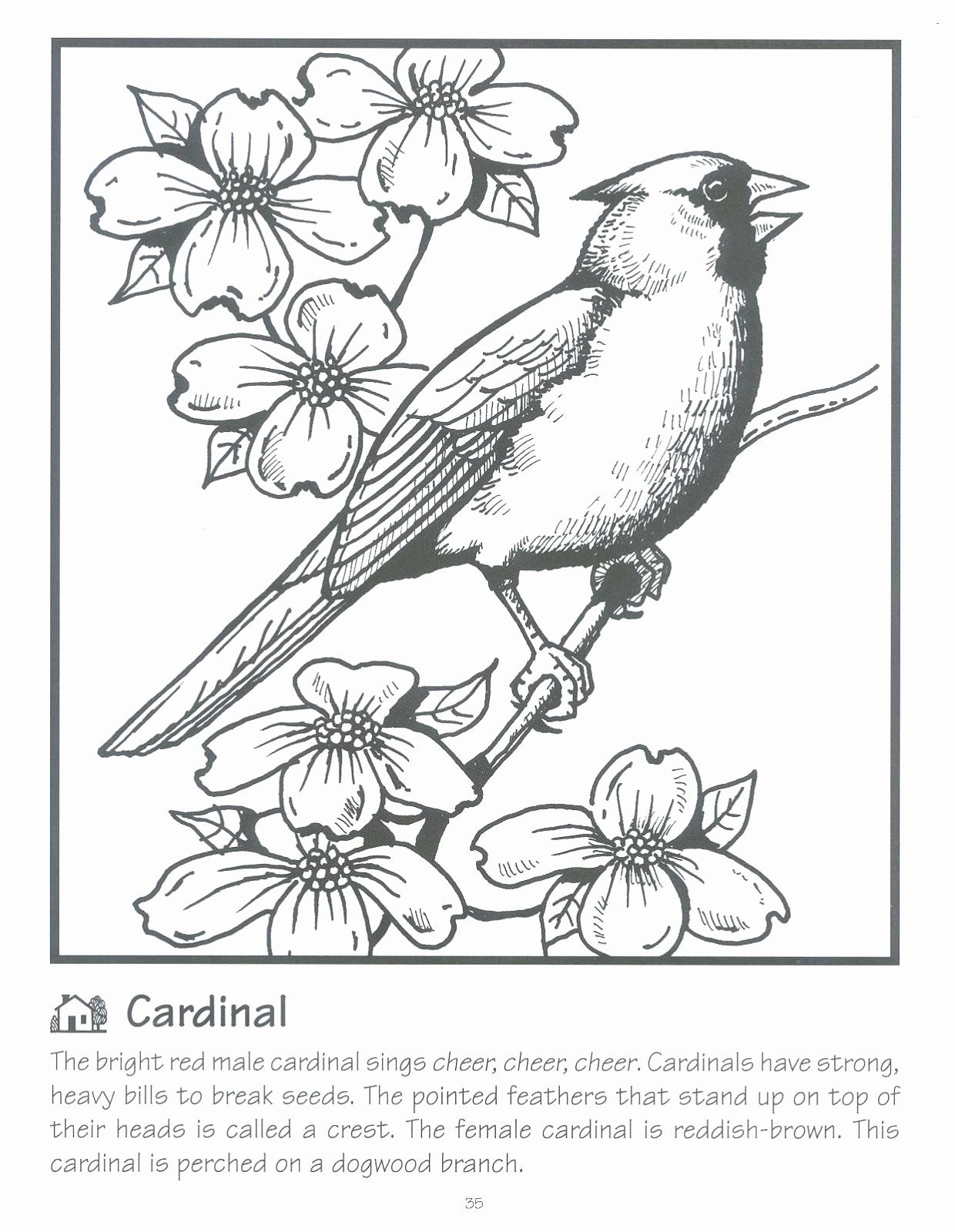 Arizona Cardinals Coloring Page Beautiful Cardinal Arizona Cardinals Coloring Pages Print Colo Animal Coloring Pages Coloring Pages Transformers Coloring Pages