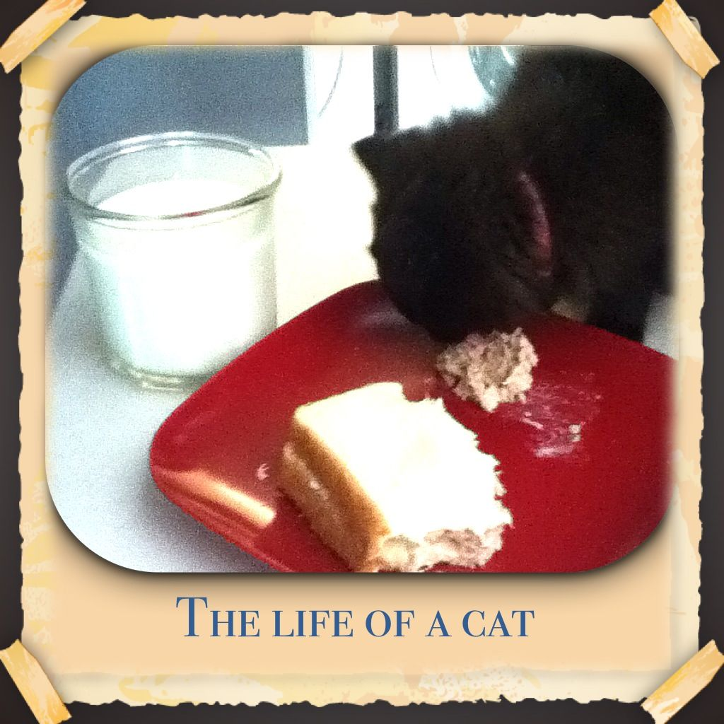 Cutest Kitten Ever Eating A Tuna Sandwich And Drinking Milk