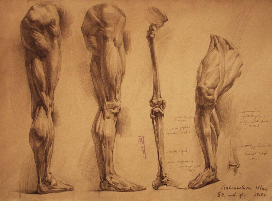 human anatomy 24 by ivany86 on DeviantArt   Anatomy   Pinterest ...