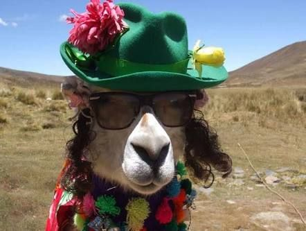 Image Result For Llama Wearing Hat Art Projects Jpg 442x333 Birthday