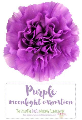 The Complete Guide To Purple Wedding Flowers Purple Flower Names Purple Wedding Flowers Inexpensive Wedding Flowers Lavender Wedding Flowers