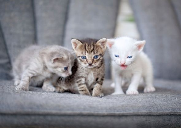 The Most Trendy Cat Names of 2014 Kittens cutest, Cute