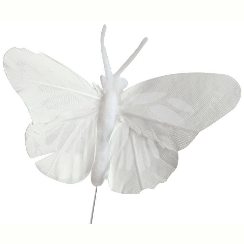 White Feather Butterfly - APAC Packaging Limited