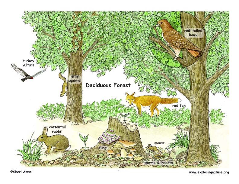 Learn about Biomes from Deciduous