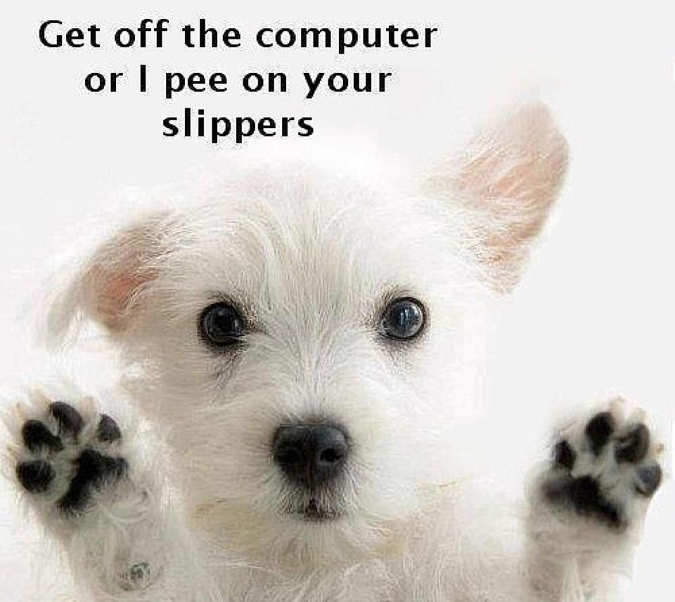 Sometimes I Think Bandit Is Saying This To Me When I Am Doing Homework Cute White Dogs Very Cute Dogs Westie Puppies