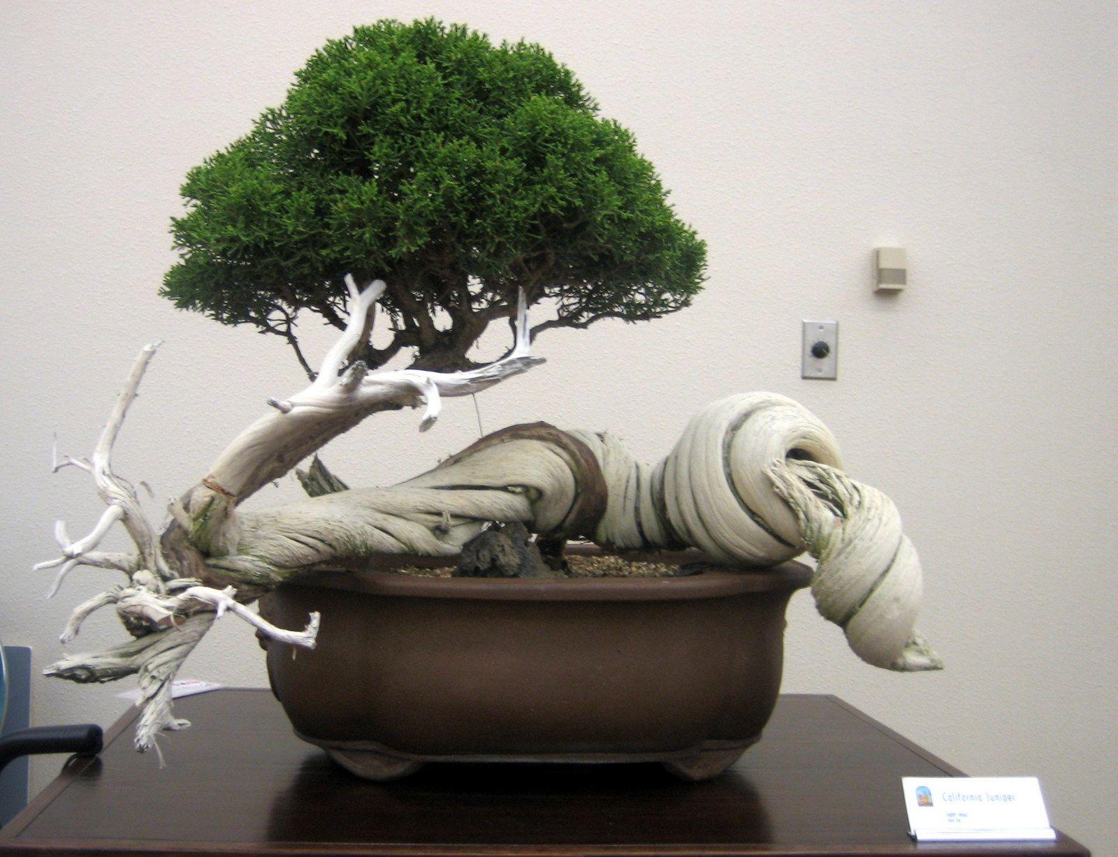 bonsai bonsai pinterest kleine b ume die kleinen und baum. Black Bedroom Furniture Sets. Home Design Ideas