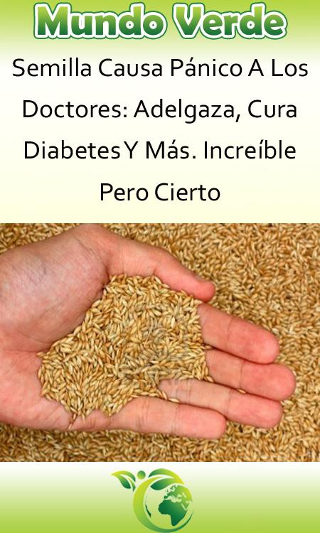remedios caseros para la diabetes alpiste y